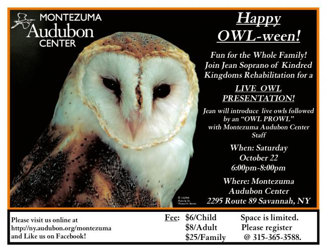 Happy Owl-ween | Beyond the Nest (Rochester)